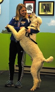 Poodle training photo