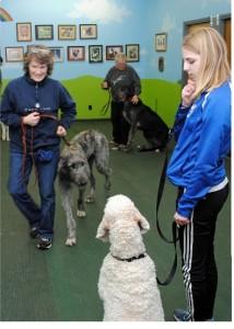 Three dogs in class